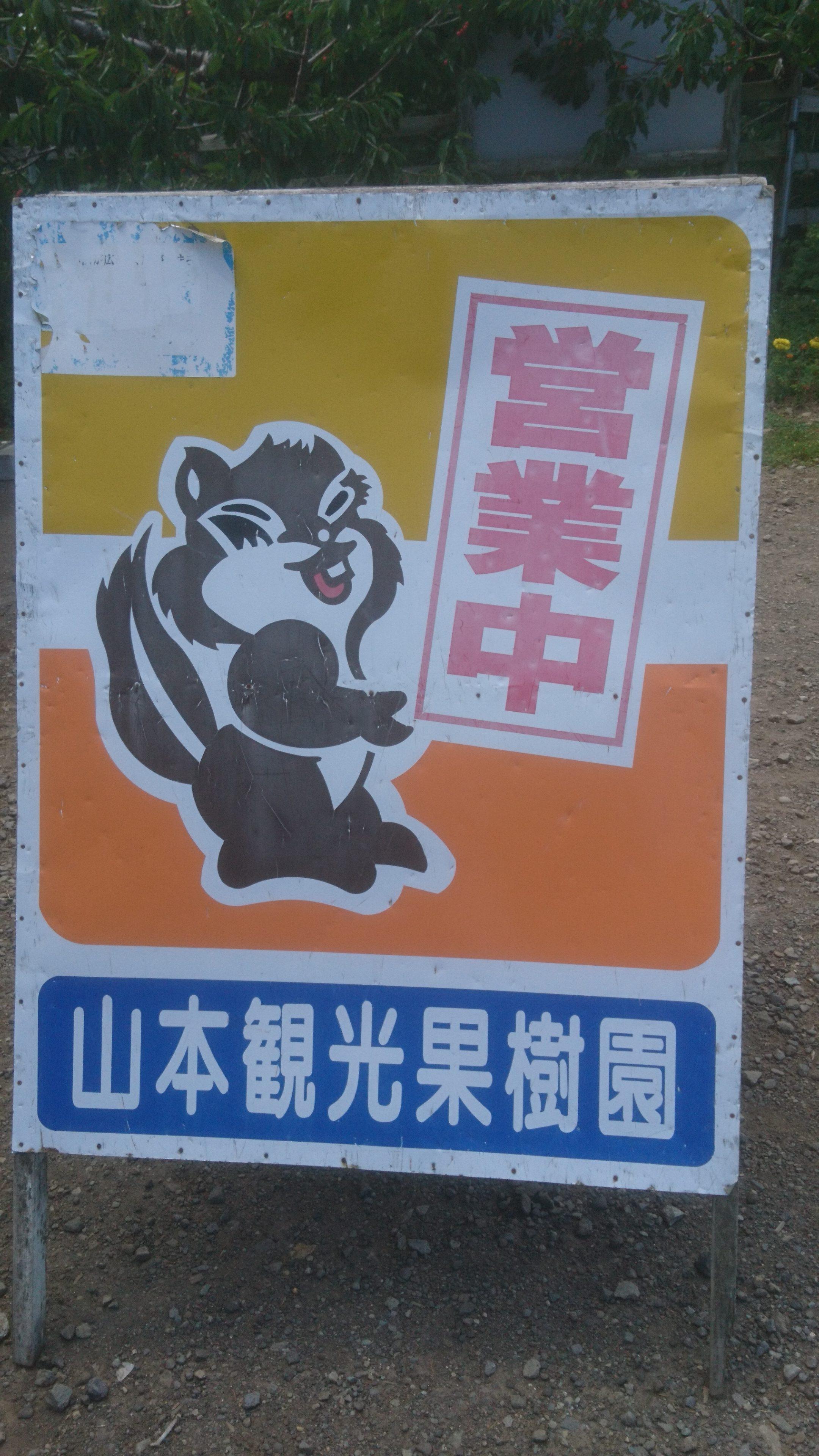 山本観光果樹園(北海道余市)のさくらんぼ狩り